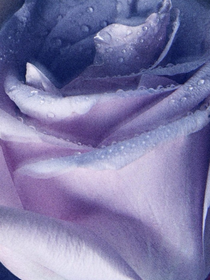 Elisabeth-Erm-by-Camilla-Akrans-Morning-Dew-Dior-5-Spring-2014-1-735x980
